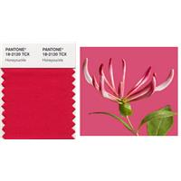 Pantone Reveals Color of the Year for 2011: PANTONE Honeysuckle